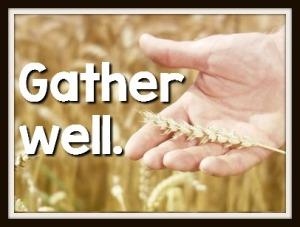 286472876-beige-grain-wheat-field-stockholm