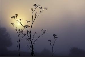 stillness-3